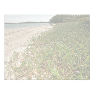 Plantas suculentas en la playa invitacion personal