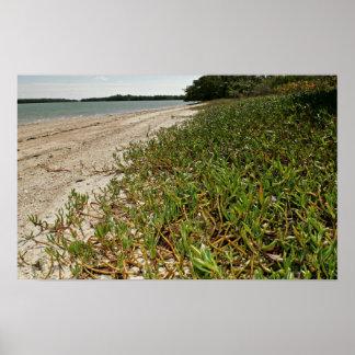 Plantas suculentas en la playa impresiones