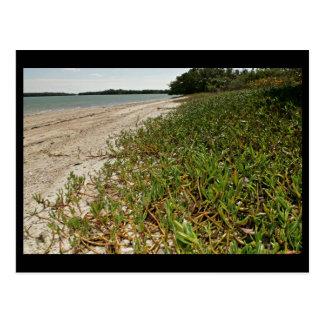 Plantas suculentas en la playa postales