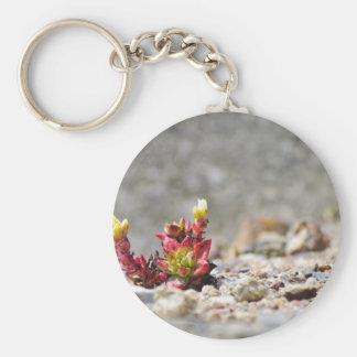 Plantas suculentas llavero redondo tipo pin