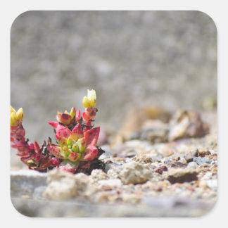 Plantas suculentas pegatina cuadrada
