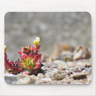 Plantas suculentas alfombrillas de ratones