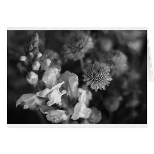 plantas tarjeta de felicitación
