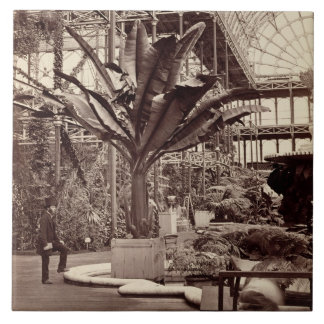 Plantas tropicales en el cuarto egipcio, Pala cris Azulejo Cuadrado Grande