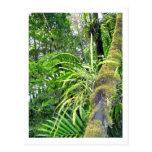 Plantas tropicales en la selva tropical del tarjetas postales