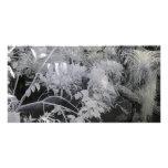 Plantas tropicales/fotografía infrarroja tarjetas personales con fotos