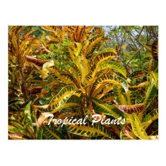 Plantas tropicales postales