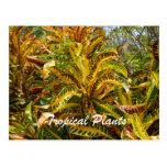 Plantas tropicales tarjetas postales