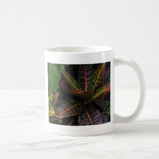 Plantas tropicales tazas