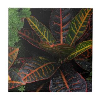 Plantas tropicales teja