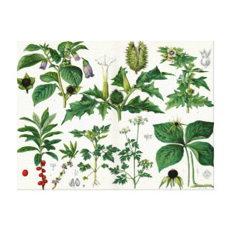 Plantas venenosas impresión en lienzo