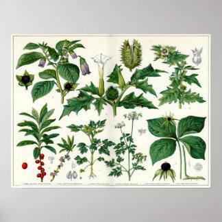 Plantas venenosas póster