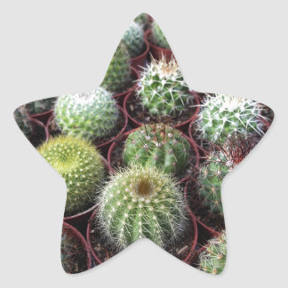Plantas verdes del cactus pegatina en forma de estrella