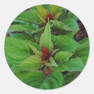 Plantas verdes etiqueta redonda