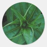Plantas verdes etiquetas redondas