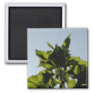 Plantas verdes imán cuadrado