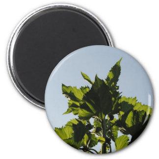 Plantas verdes imán redondo 5 cm