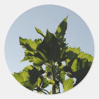 Plantas verdes pegatina redonda