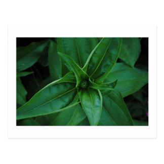 Plantas verdes postal