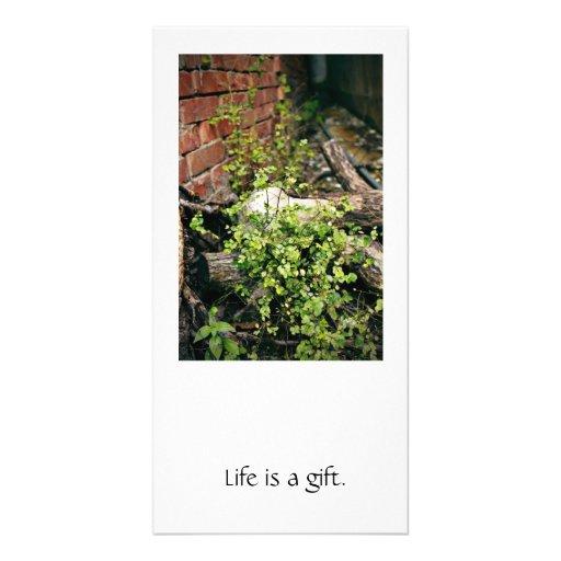 Plantas verdes tarjetas fotograficas personalizadas