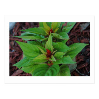 Plantas verdes tarjetas postales