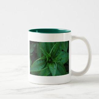 Plantas verdes taza dos tonos