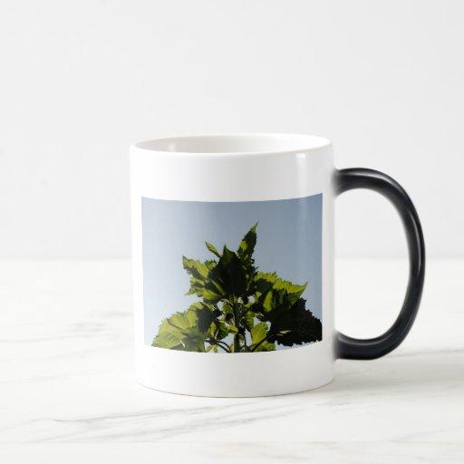Plantas verdes taza mágica