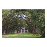 Plantation House 2 Poster