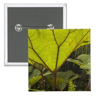 Plante el detalle en un jardín botánico Ecuador 2 Pins