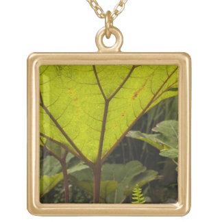 Plante el detalle en un jardín botánico, Ecuador 2 Colgante Cuadrado