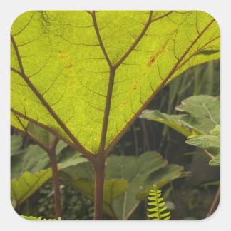 Plante el detalle en un jardín botánico, Ecuador 2 Pegatina Cuadrada