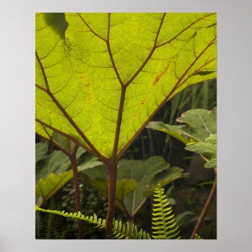 Plante el detalle en un jardín botánico, Ecuador 2 Póster