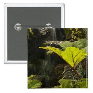 Plante el detalle en un jardín botánico Ecuador Pins