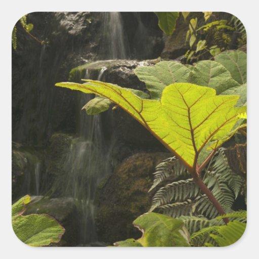 Plante el detalle en un jardín botánico, Ecuador Pegatina Cuadrada