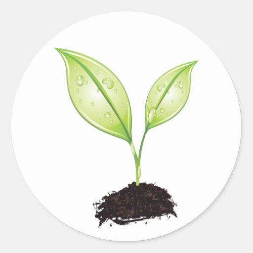 Plante la hoja de la tierra verde del almácigo del pegatina redonda