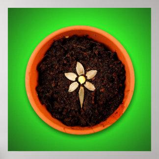 Plante un poster de la flor