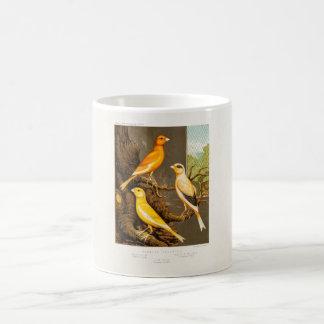 Plantilla amarilla las Canarias del pájaro de la c Taza Básica Blanca
