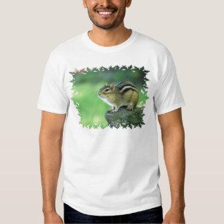 Plantilla básica de la camiseta - modificada para poleras