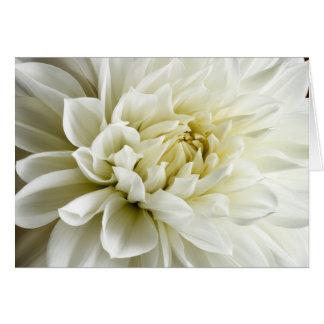 Plantilla blanca de la flor del primer de la dalia tarjeta pequeña