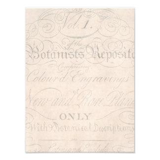 Plantilla botánica de los 1700s de la escritura cojinete
