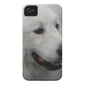 plantilla Ca del iphone 4 apenas allí QPC - iPhone 4 Case-Mate Cárcasas