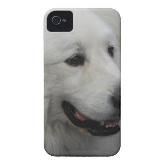 plantilla Ca del iphone 4 apenas allí QPC - modifi iPhone 4 Case-Mate Cárcasas