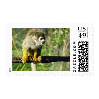 Plantilla curiosa del mono franqueo