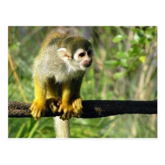 Plantilla curiosa del mono postal