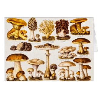 Plantilla de la variedad de la seta de los 1800s d tarjetas