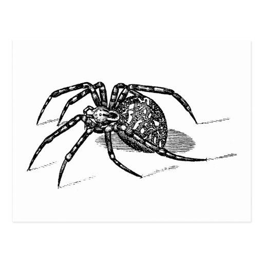 Plantilla de las arañas del ejemplo de la araña de tarjeta postal
