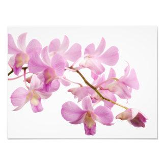 Plantilla de las orquídeas de la flor de la fotografía
