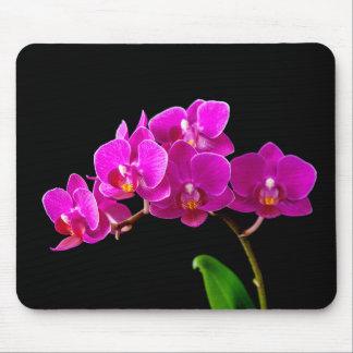 Plantilla de las orquídeas de la flor de la tapete de raton
