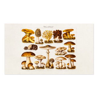 Plantilla de las setas de la variedad de la seta d tarjetas de visita