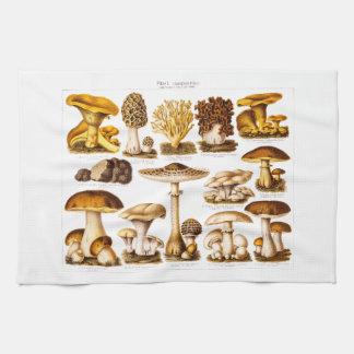 Plantilla de las setas de la variedad de la seta d toallas de cocina